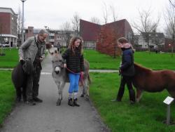Lees meer: wandelen met de ezel en de pony's