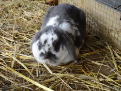 DSC02829 konijn