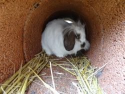 DSC02834 konijn