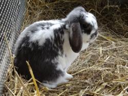 DSC03285 konijn