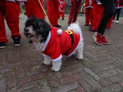 Santa Run 87